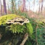 Voordelen natuurbegraven